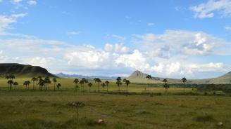 Саваната в част от Бразилия изчезва заради скотовъдство