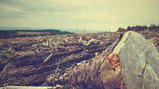 Отрязано дърво уби млад мъж край пазарджишко село