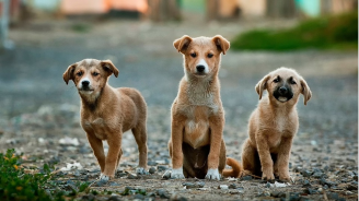 3 872 безстопанствени кучета са осиновени през  миналата година