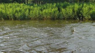 РИОСВ-Бургас провери чистотата на речните корита в областта