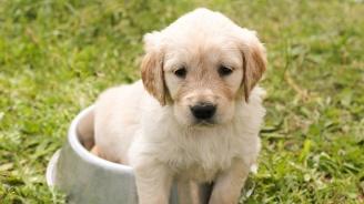 Нов вид интернет измама с кучета от чужбина
