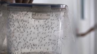 Русия погна торни мухи