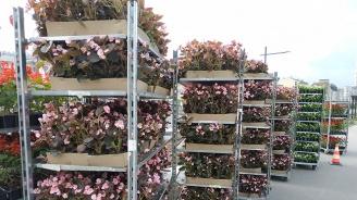 В зелените площи в Габрово са засадени 32 хиляди летни цветя