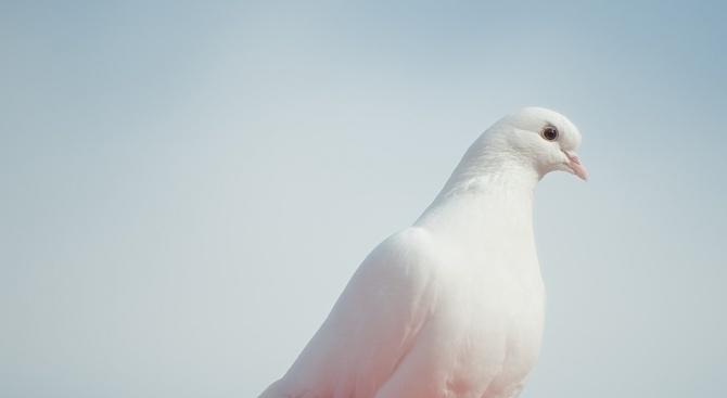 Свети Дух се отбелязва днес. Той се отбелязва 51 дни