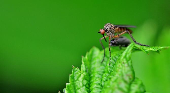 Продължава обработката срещу комари в Община Поморие