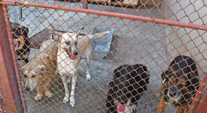 Подписка за изграждането на кучешки приют в Сливен разцепи на
