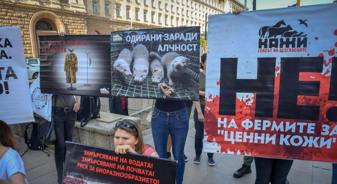Протест срещу фермите за норки пред Министерски съвет