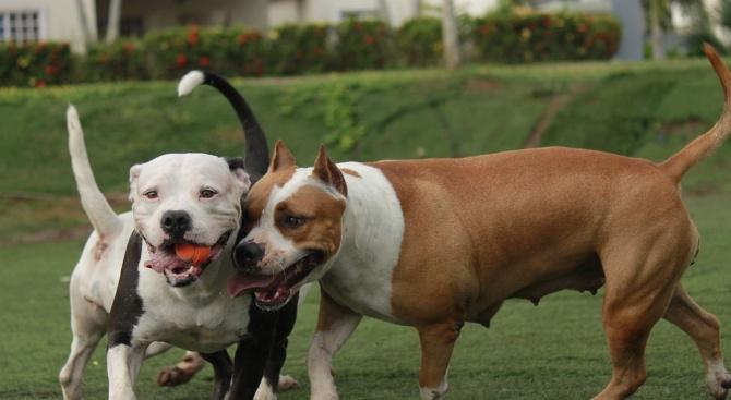 Масови проверки как стопаните разхождат кучетата си. Поиска ги Върховната