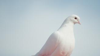 Днес е Свети дух - ето какво се прави на празника