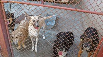 Кучешки приют раздели защитниците на животните в Сливен