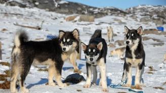 Метеоролог засне как кучета ходят по вода в Гренландия