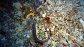 Откриха нов вид червей с очи на главата и в края на тялото