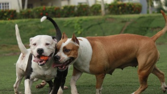 ВАП поиска масови проверки на кучета и собствениците им