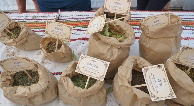 В България се събират около 200 вида лечебни растения, които