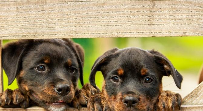 Общински изолатор за бездомни кучета във Враца ще бъде изграден