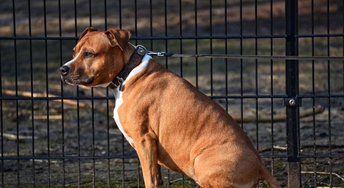 До 1000 лева глоба за стопани на агресивни кучета, които