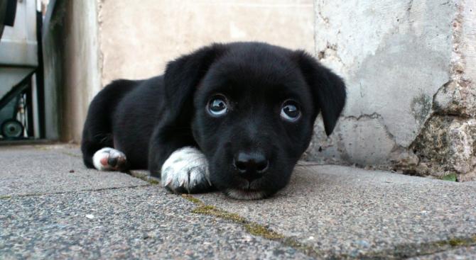Ромка обеси кученцето си пред дома на съседите си