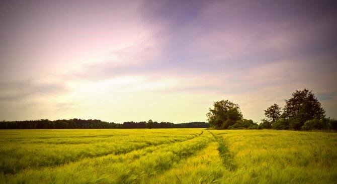Средната цена на един декар земеделска земя в област Добрич