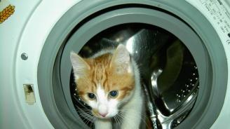 Котка оживя след 35-минутен цикъл в пералнята