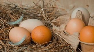 Солариум за кокошки увеличава количеството на витамин D в яйцата