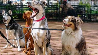 Община Ловеч погва собственици на домашни кучетата