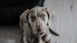 Обсъждат новите правила за отглеждане на домашни кучета
