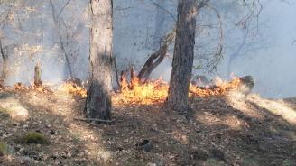 Учение за действия при горски пожари ще се състои в Новозагорско