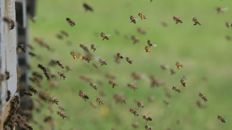 Международен проект стимулира модернизациятана пчеларския секторв Черноморския регион