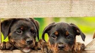 Изграждат приют за кучета във Враца