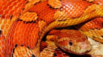 Змия се появи в читалището в Ботевград