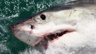 Акули убиха американка пред очите на родителите ѝ до Бахамските острови