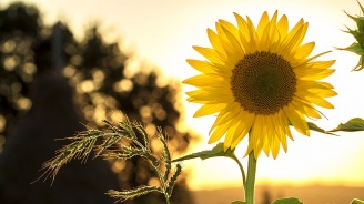 Слънчева ще бъде неделята