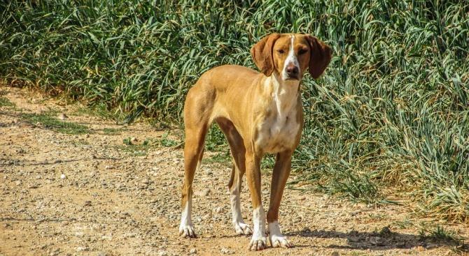 Майка и дете бяха нападнати от безпризорни кучета в Дупница