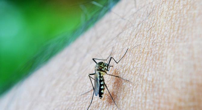 Пръскането против комари над Козлодуй се отлага за 8 юли