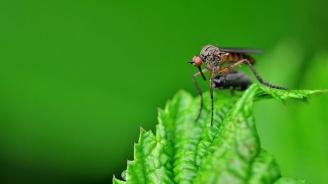 В Попово пръскат срещу комари с топъл аерозол