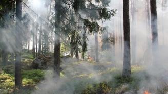 Хиляди се борят с голям пожар в Северна Германия