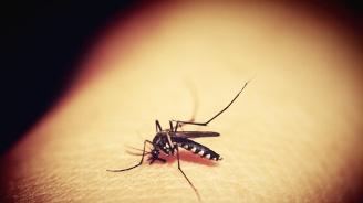 Хондурас обяви национална епидемия от денга
