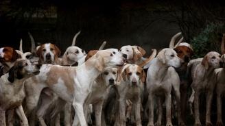 Учени откриха кои кучета са най-агресивни
