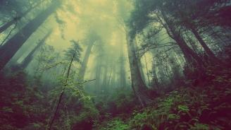 Учени призоваха да бъдат засадени трилион дървета