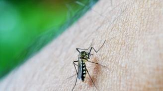 Продължават обработките срещу комари