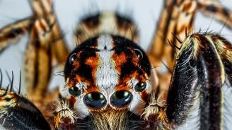 Кръстиха паяк на името на Карл Лагерфелд