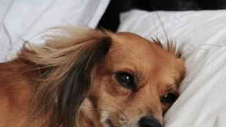 Стопаните на кучета често предпочитат компанията им пред тази на партньорите си