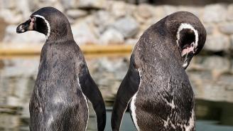 Зоопарк в Мюнхен ще организира обиколки, посветени на хомосексуализма при животните