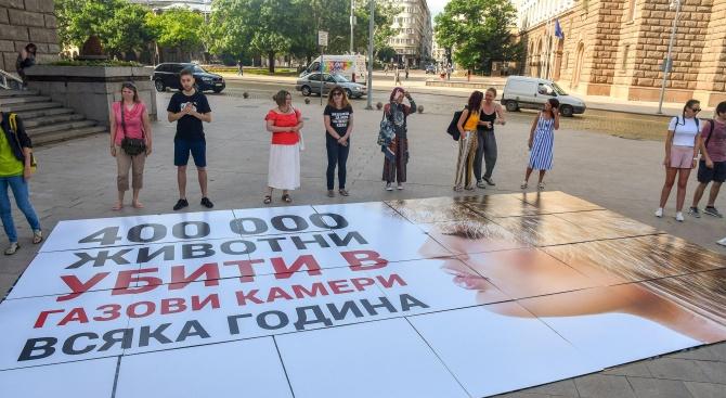 Пореден протест в София с искане за забрана на фермите за ценни кожи