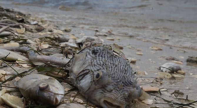 За масов мор на риба в река Кентъки съобщиха медии