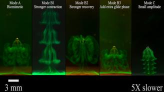 Учени създадоха миниатюрен робот, който имитира медуза