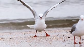 Екзотична оранжева птица се оказа чайка, покрита с къри