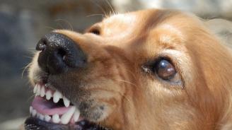 Куче нахапа две деца в Асеновград