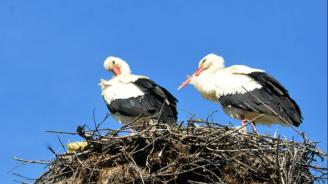 ЧЕЗ разпределение ще обезопаси 100 щъркелови гнезда в област Враца