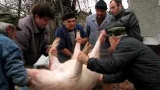 Стопани масово колят прасетата си в Свищовско